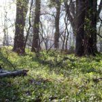 Апрельский лес в окрестностях Подебрад