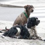 В Чехии нет бродячих собак