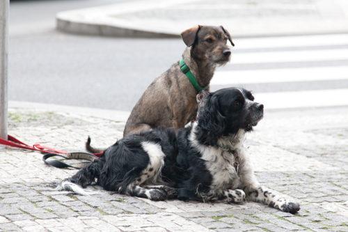Собаки в Праге
